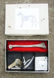 A box of bones
