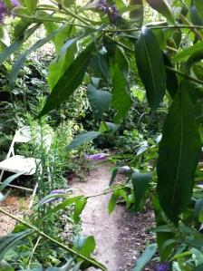 My garden 2011