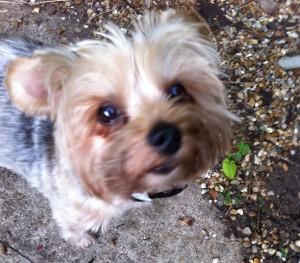 Monty, my dog.