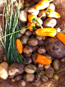 Potatoes, hot peppers and chives